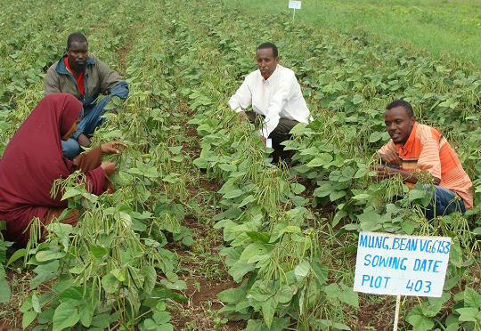 [Kenya] Agricultural industry alliance supports government's new pesticide legislation